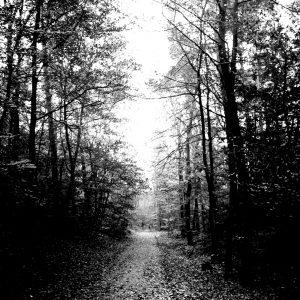 Winterwald aus der Weihnachtsgeschichte von BeraTina und Martina Decker
